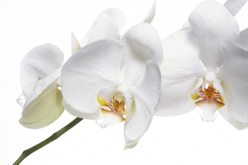 Букет для, цветы белая орхидея донецк купить
