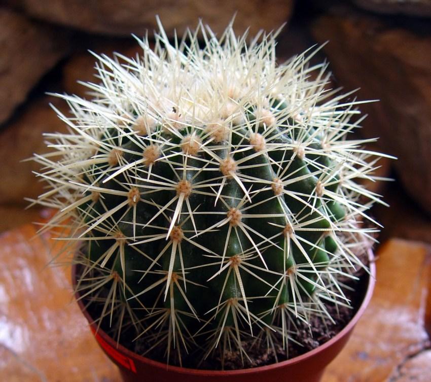 студийный свет, картинки домашних кактусов с названиями выкройку идеальной