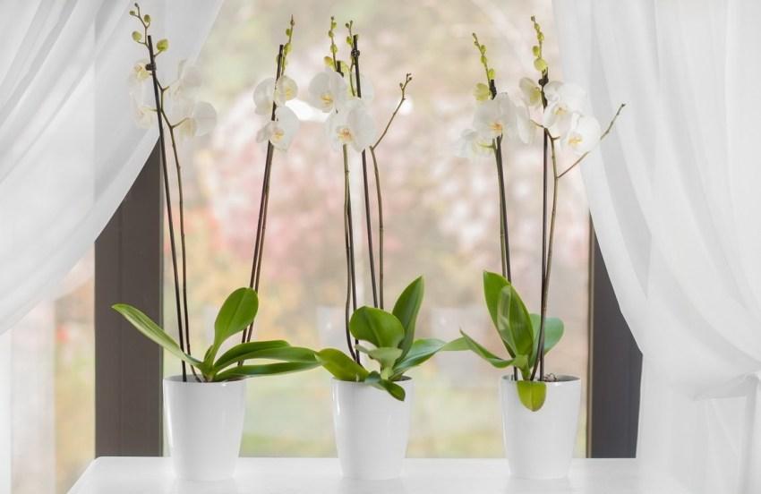 Что такое кашпо для орхидей