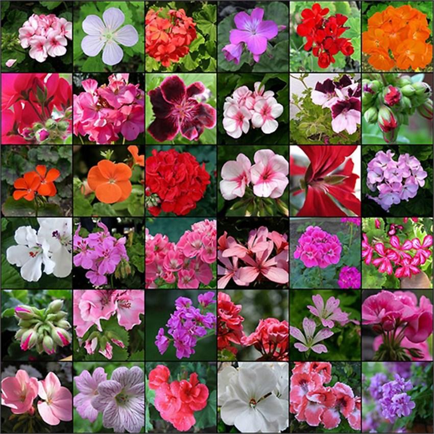 виды цветов фото и наименование вот