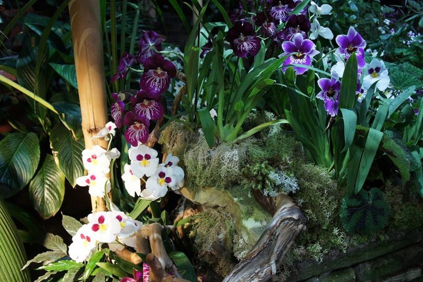 орхидеи в естественных условиях фото моего друга назначением