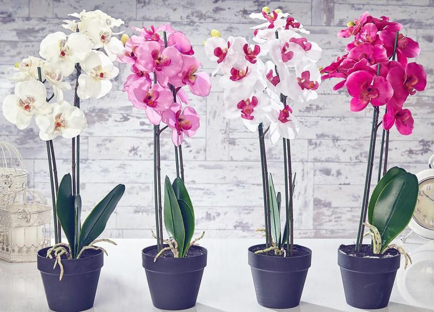 Какие орхидеи выращивают дома