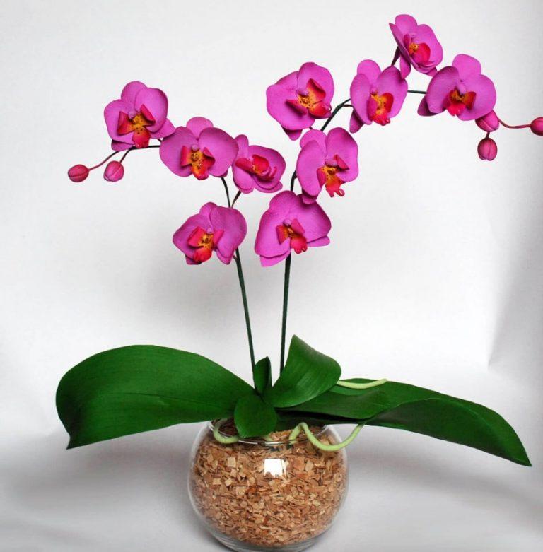 Картинка орхидеи в горшке