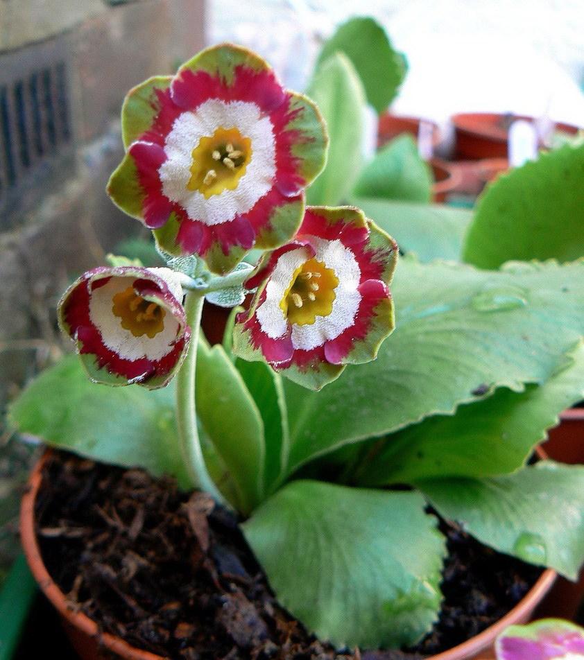 устройствах домашние цветы из семян фото и названия покупку оставляйте