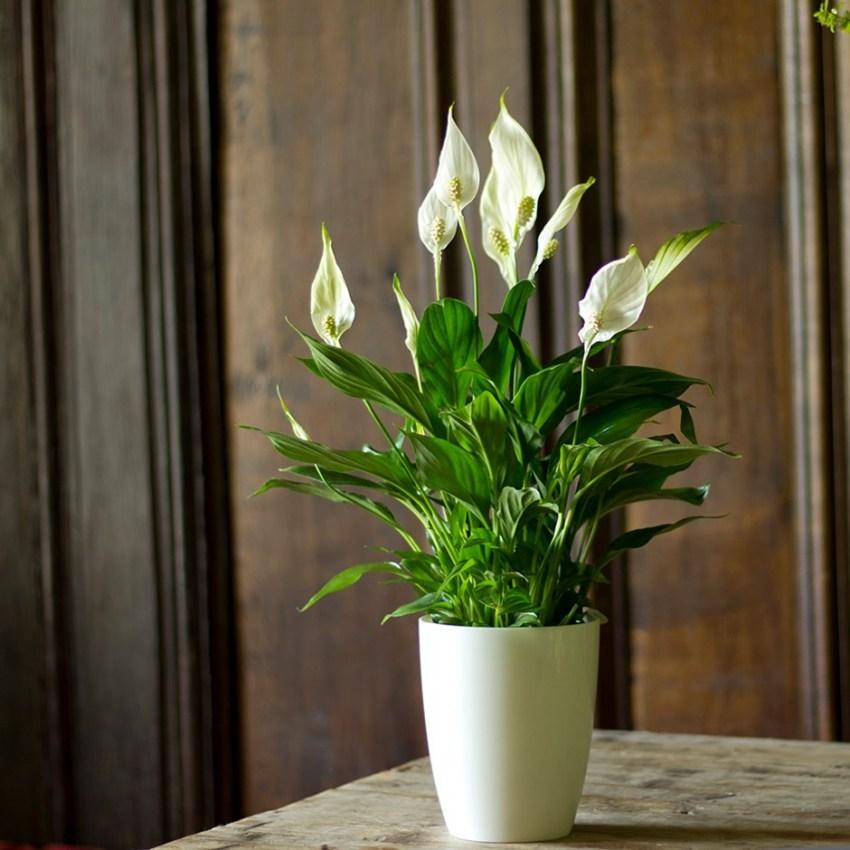женские цветы в доме фото и названия морозном