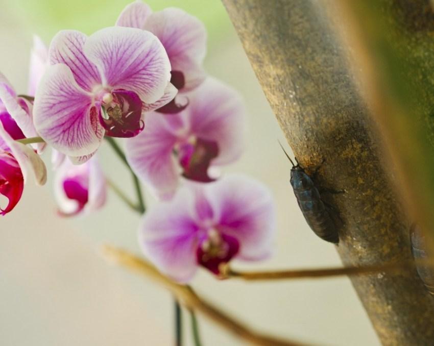 Сколько и когда цветёт орхидея