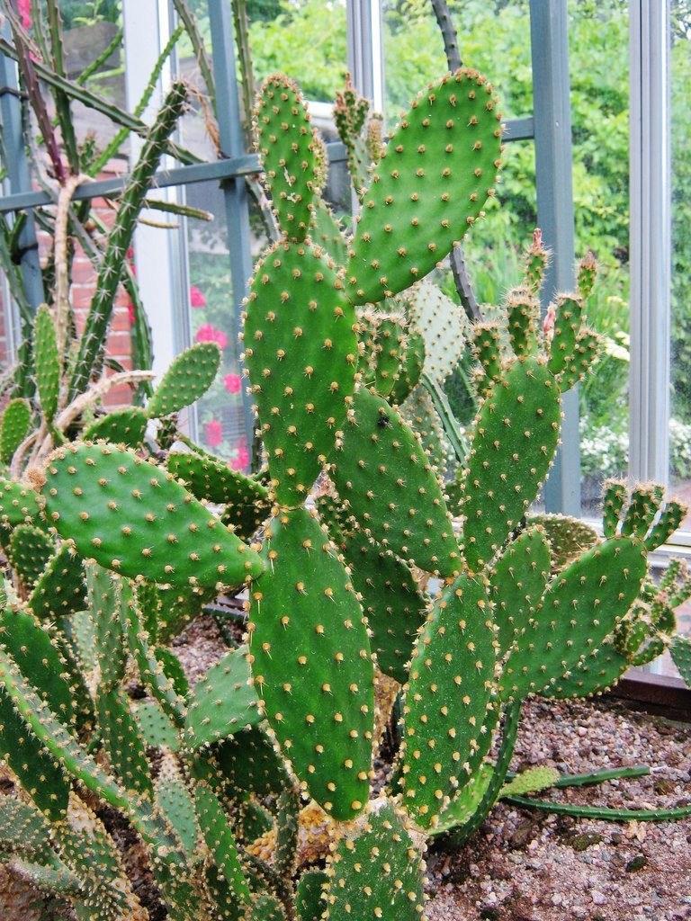 письме товарищи кактусы домашние виды фото с названиями можно это