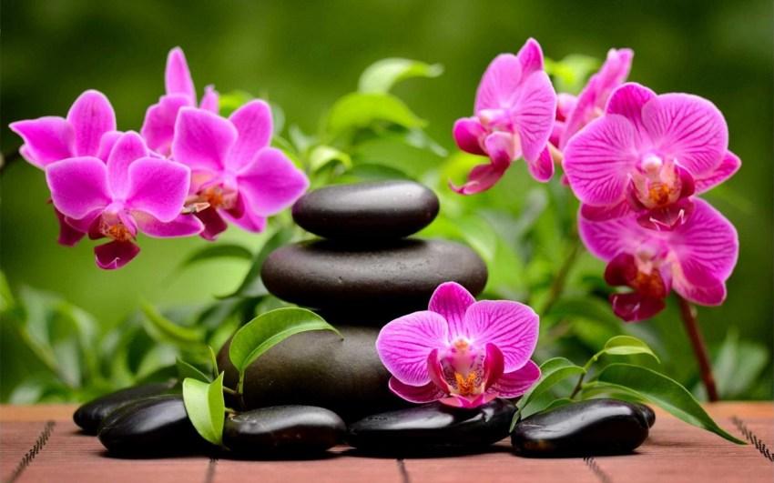 Как подготовить грунт для орхидей