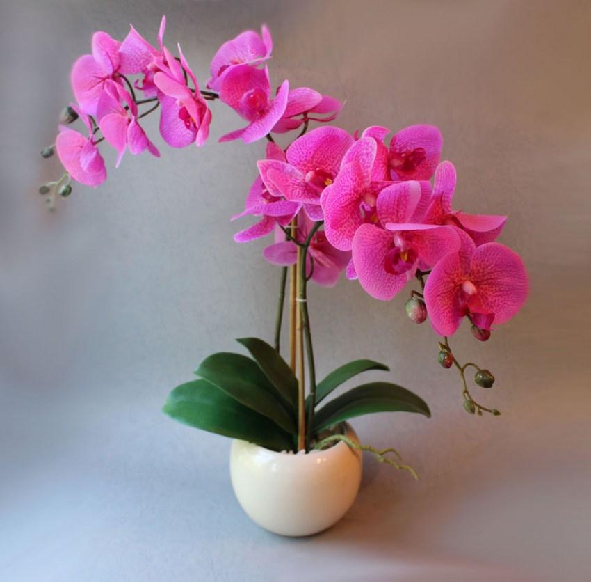 У орхидеи желтеют листья: причины и лечение
